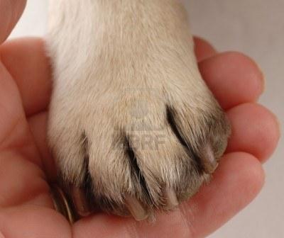 5728061-assistenza-veterinaria--persone-in-mano-di-zampa-di-cane