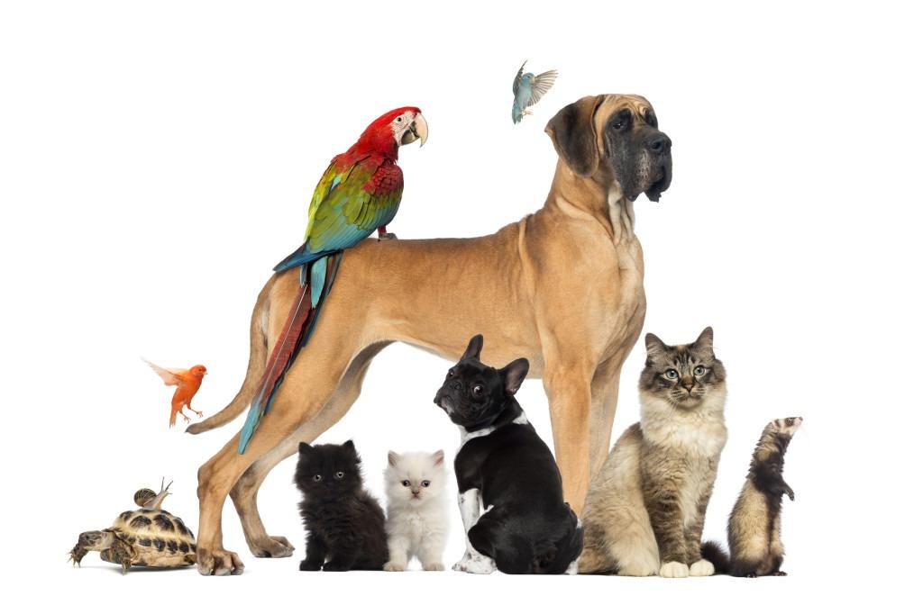 gruppo_animali_rev
