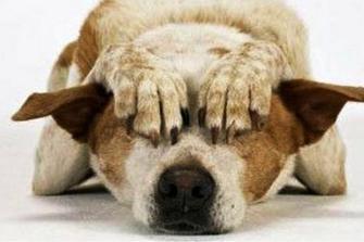 come-tranquillizzare-un-cane-che-ha-paura_a536c3c94e119333210ebf6b9ed268ae