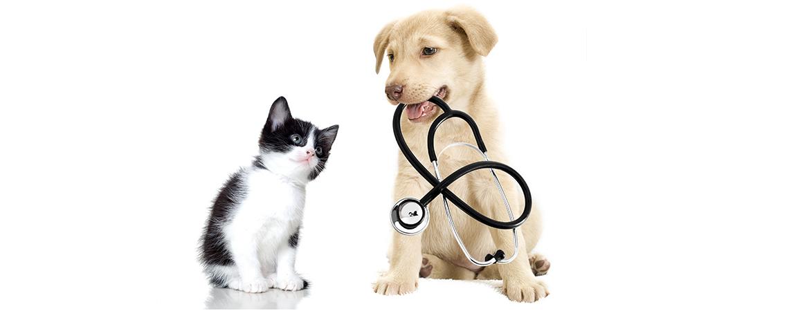 centro-veterinario-palermo2